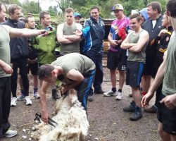 Sheep Shearing Molly Gallivans (2)